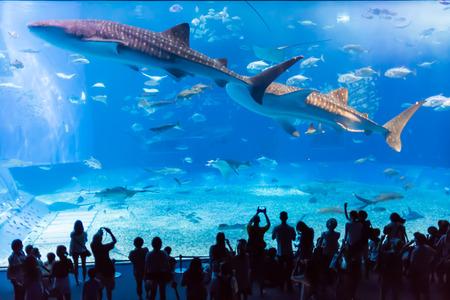 ballena azul: La gente que mira el tiburón ballena entre otros peces en el acuario Churaumi en Okinawa, Japón