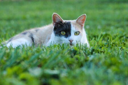 Calico kitten hiding in the grass Stock Photo
