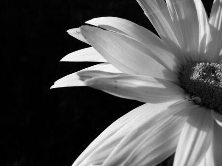 half of a daisy Banco de Imagens