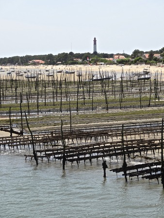 ferret: Cap Ferret oysters at low tide in Gironde