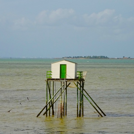 plaice: squares on the island Madam in Charente Maritime
