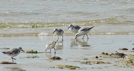 birds on a beach of RE Island