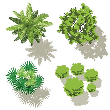 arbre vue dessus: Les arbres en vue de dessus, la conception pour la carte