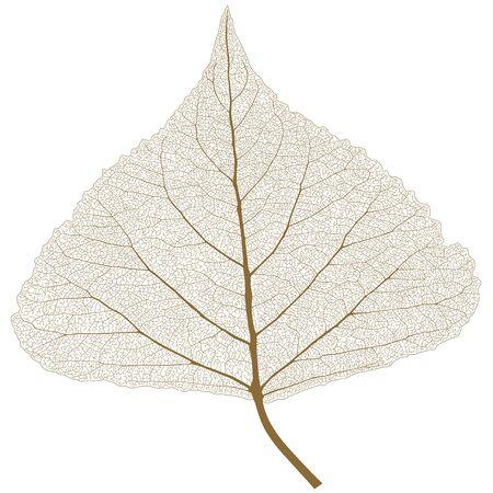 リブ、秋の色葉します。  イラスト・ベクター素材