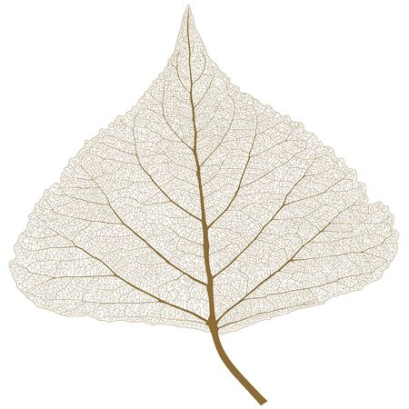 Leaf with ribs, autumn color