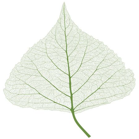 Leaf with ribs, spring color 向量圖像