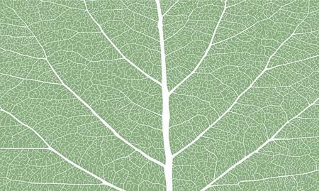 Leaf with ribs, close up 向量圖像