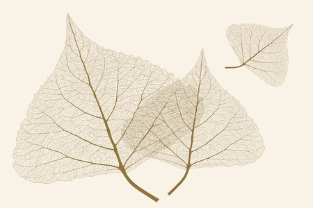 Leaves with ribs, Autumn color