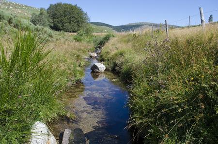 モン Lozere タルンの源の近くの小川します。