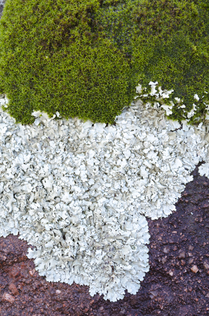 lichen and moss on red rock