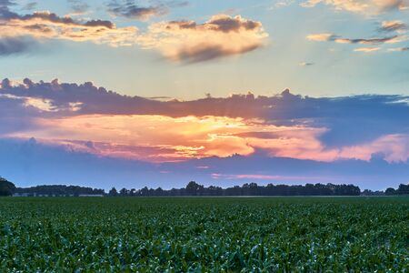 cloudy sunset over a cornfield