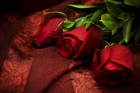 Three beautiful red roses against a red background photo