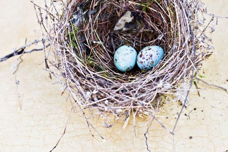 Real nest and blue spotted chipping sparrow eggs on tan craqlaquere background.
