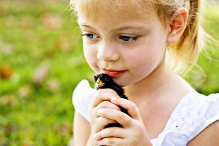 Small child holding a little black chick tenderly against her cheeks.  Stock Photo
