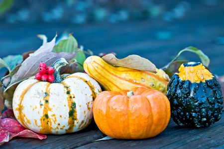 Pumpkins and gourds with autumn leaves and berries outdoors ready for the autumn holidays. Stock Photo