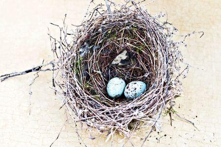 craquelure: Anidar y azul huevos manchados astillado de Gorri�n sobre fondo de craquelure tan real.  Foto de archivo