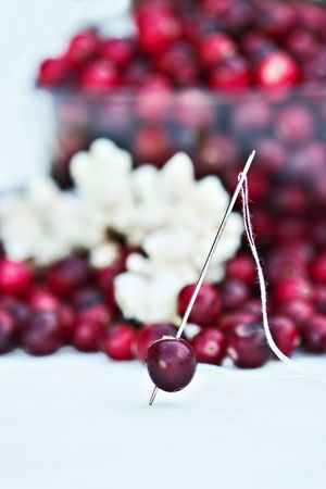 A cranberry is ready to be strung with the popcorn to decorate the Christmas tree.