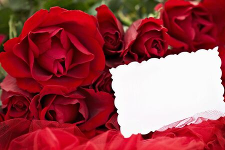 Beautiful red roses and blank card lying on a red background. Shallow DOF  photo