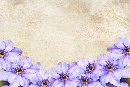 Photo based illustrated background with purple Clematis flowers.
