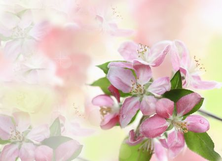 Beautiful spring background with room for text. photo