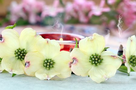 Relaxing candles and incense cones burn behind a role of dogwood blossoms. photo