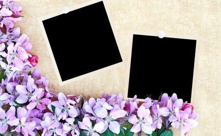 craquelure: Fondo de craquelure floral con fotos en blanco. Espacio para el texto.  Foto de archivo