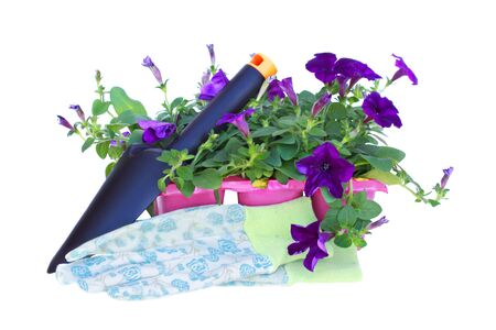 gardening gloves: Pack of petunias with trowel and gardening gloves isolated on a white background.