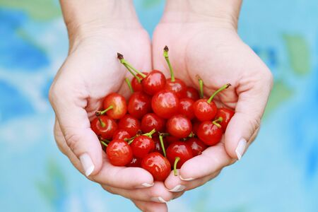 close up food: Woman offers freshly picked cherries. Shallow DOF. Stock Photo