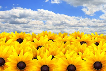Vivid yellow summer flowers against a blue sky.