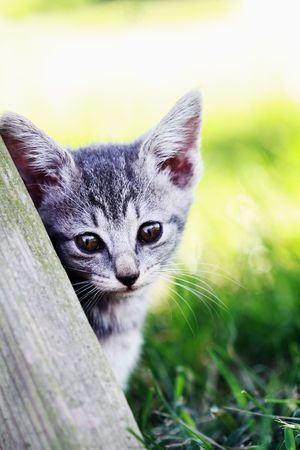 Little kitten leans against an old picnic table and looks into the camera. Shallow DOF with selective focus on kittens face. Stock Photo