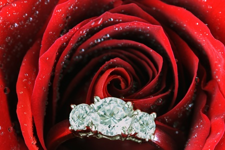Diamond engagement ring tucked inside of a dark red rose with droplets of water on it. photo