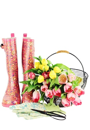 Fresh cut tulips with galoshes, gardening gloves and sheers isolated on a white background with copyspace available. photo