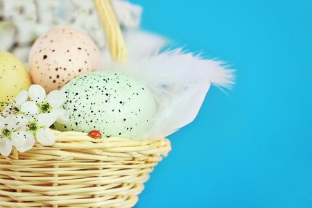 Basket full of Easter eggs in a basket with a ladybird and spring flowers against a blue background with room for copy space. Extreme shallow DOF.