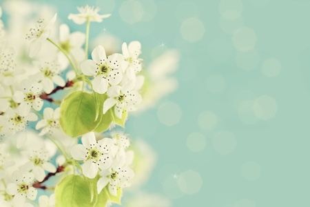 Beautiful tree blossoms against a blue background. Stock Photo