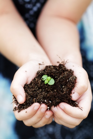 Seedling plant in the hands of a child  Stock Photo