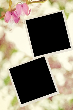 Blank photos with Bleeding Hearts.