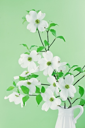 Bouquet of white Dogwood blossoms against a green background. photo