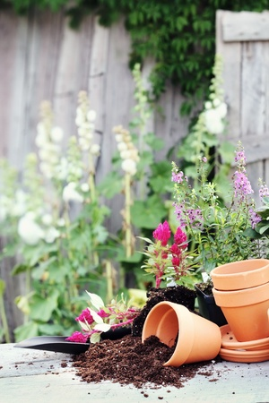 Rustic table with terracotta pots, potting soil, trowel and flowers in front of an old weathered gardening shed.