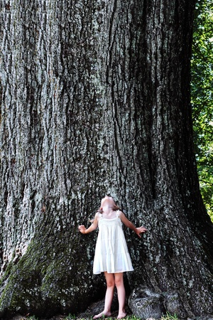 five years old: Little girl stands at the base of a very large oak tree and looks up. Stock Photo