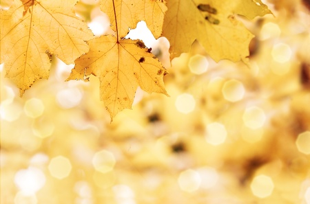 Colorful autumn leaves with shallow focus background.