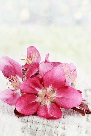 Apple blossoms on a rustic background with copy space.