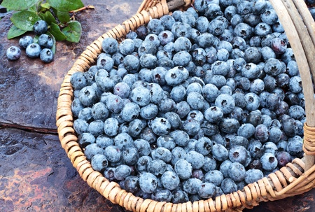 super macro: Fresh picked organic blueberries in a basket on a rustic slate background. Shallow depth of field with some blur on handle.