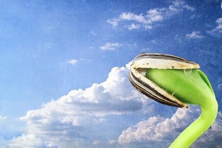 germinación: La imagen de Grunged de una plántula de girasol contra un celaje. Foto de archivo
