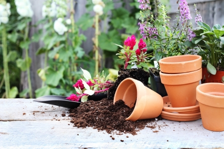 Table rustique avec des pots de fleurs, terreau de rempotage, à la truelle et les plantes en face d'un vieux weathered jardinage hangar. Banque d'images