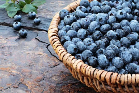 food staple: Fresh picked organic blueberries  in a woven basket on a rustic slate background. Shallow depth of field.