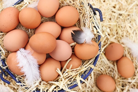 Large clutch of fresh free range eggs in a nest of straw.