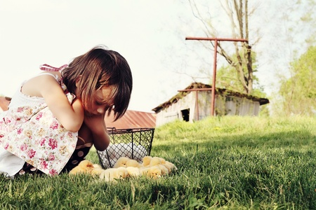 Little girl watching Buff Orpington chicks  with chicken coop and barn in far background. Extreme shallow depth of field.