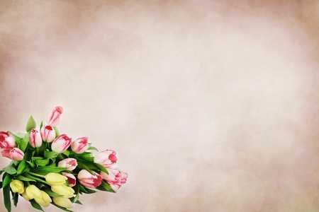Beautiful tulips against a soft background with room for text.