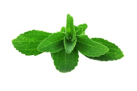 Stevia bladeren geà ¯ soleerd op een witte achtergrond Stockfoto - 13871703