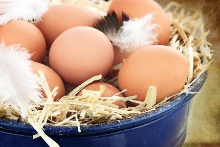 Fresh free range eggs in a nest of straw.   Stock Photo
